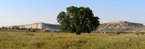 Суворовский Дуб в Крыму