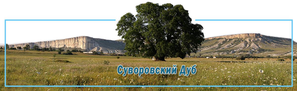 Суворовский Дуб в Белогорске